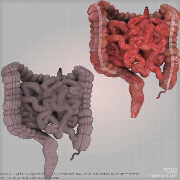 maya colon large intestine small