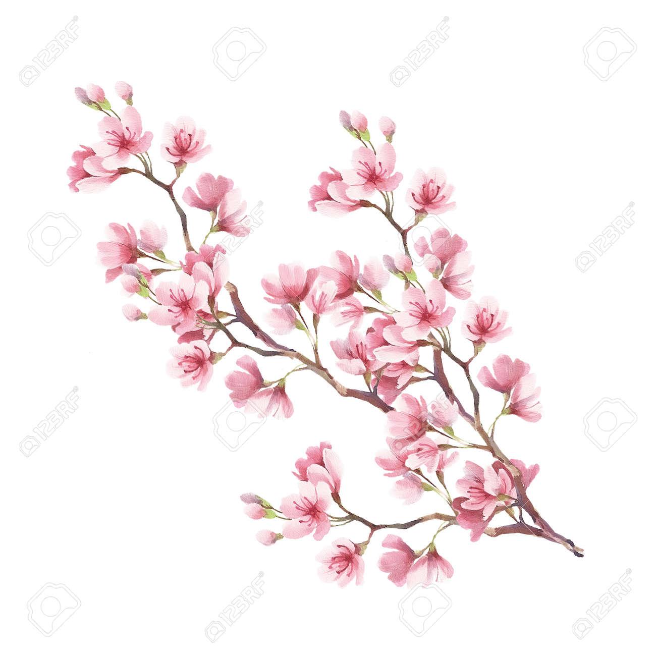 Branche De Fleurs De Cerisier Dessin A La Main De L Aquarelle Banque D Images Et Photos Libres De Droits Image 73659265
