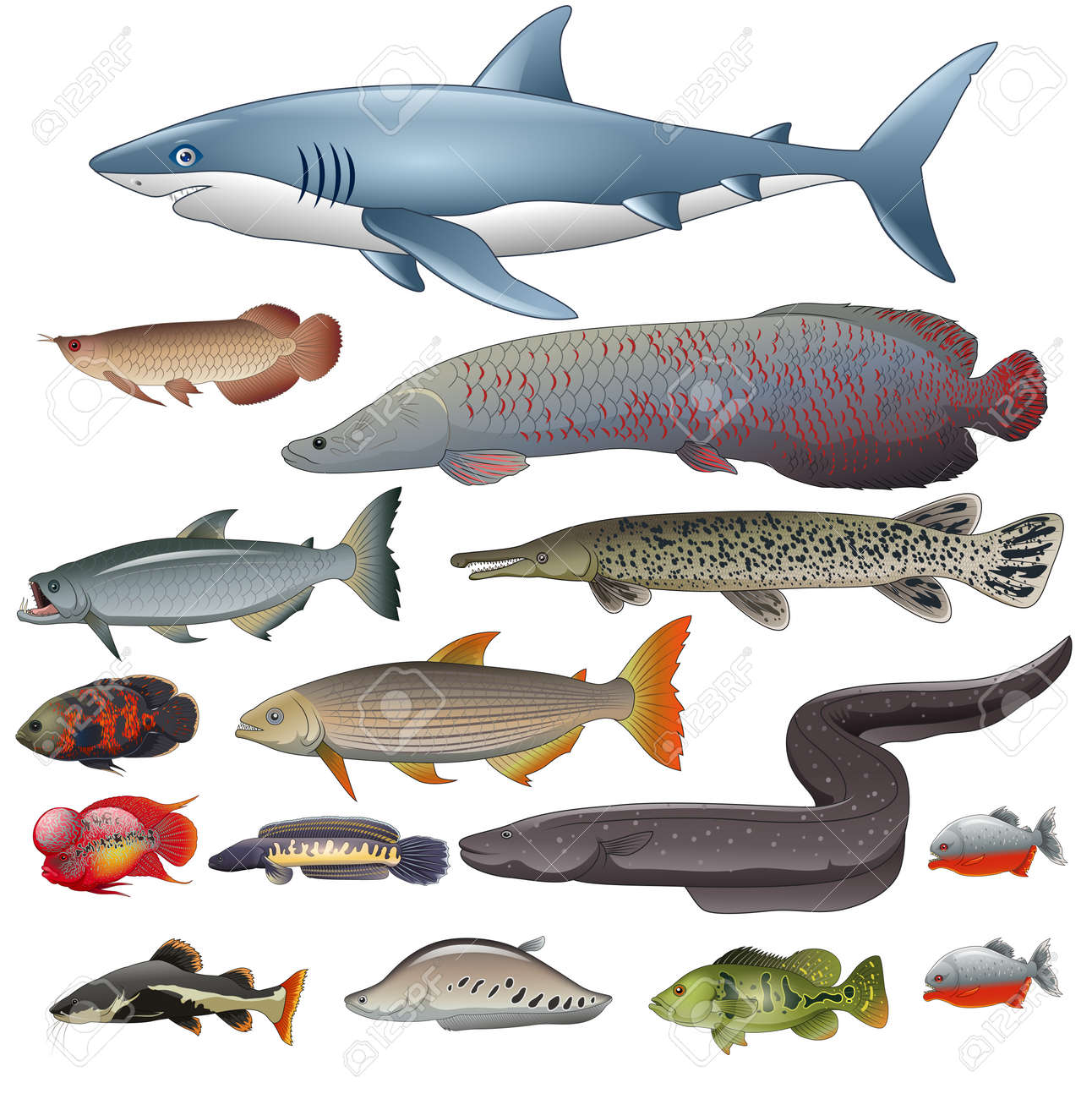 Freshwater Fish Set Illustration Of Different Types Of Fish Royalty Free Cliparts Vectors And Stock Illustration Image 138107547