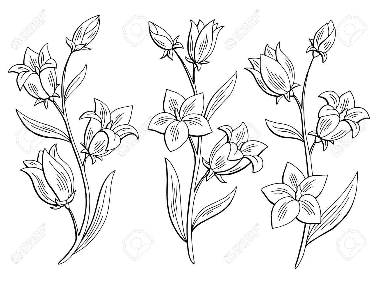 Step Drawing Vector Blue Bluebell Pictures Picturesboss
