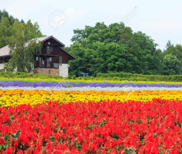 Furano Hokkaido Japan July 30 2015 Various Colorful Flowers Fields In