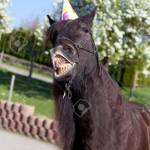Funny Horse With Party Has Celebrate His Birthday Stock Photo Picture And Royalty Free Image Image 82491024