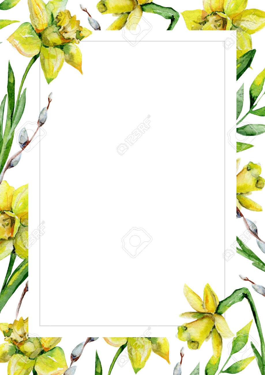 daffodils and green grass and pussy willow on white flower background