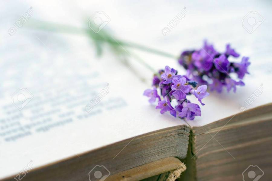 Open Old Brown Covered Book With Blue Lavender Flower On Top     Open old brown covered book with blue lavender flower on top  selective  focus Stock Photo
