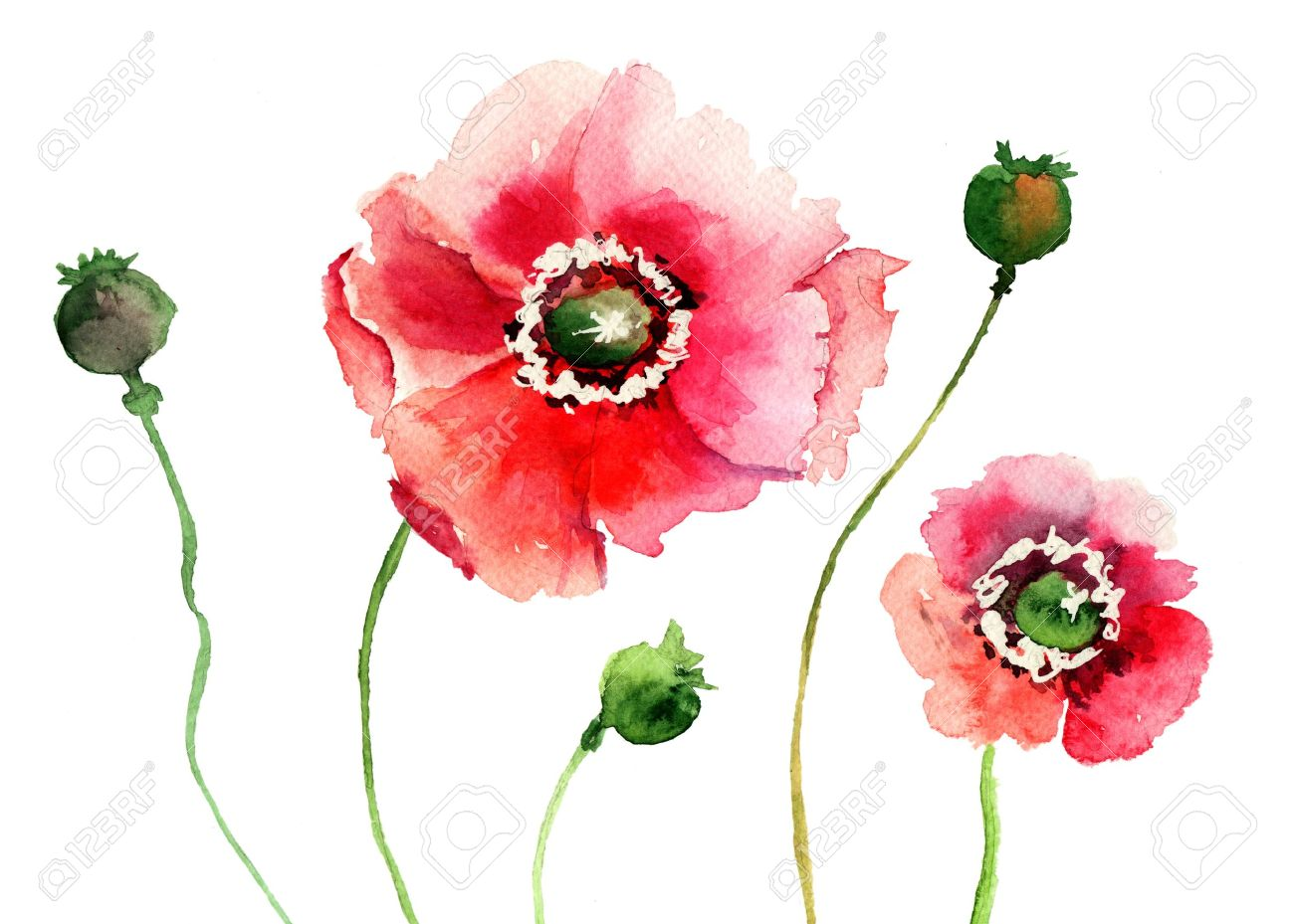 Stylized Poppy Flowers Illustration Stock Photo  Picture And Royalty     Illustration   Stylized Poppy flowers illustration