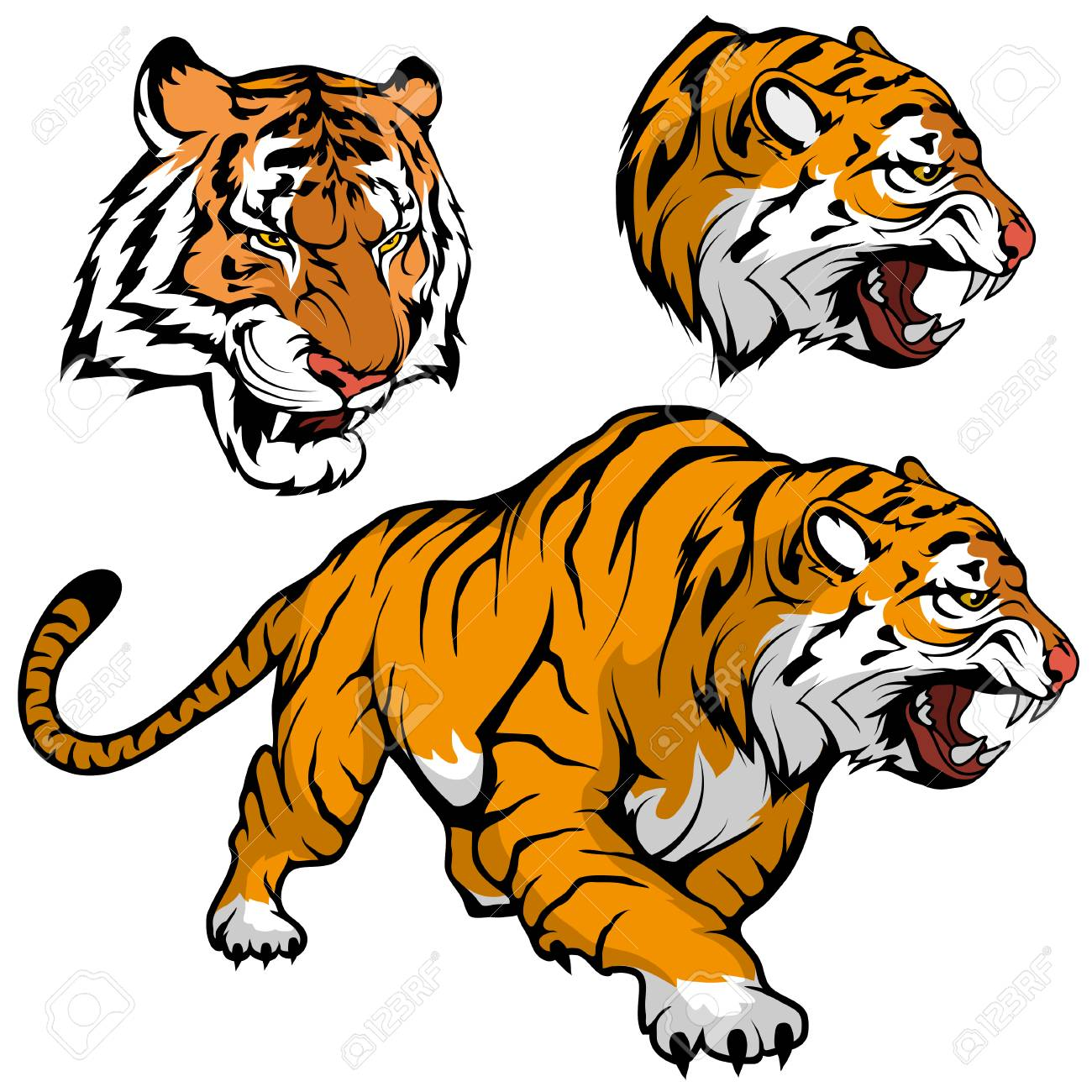 Bengal Tiger Set Suitable As Team Mascot Royal Tiger Drawing Royalty Free Cliparts Vectors And Stock Illustration Image 124802725