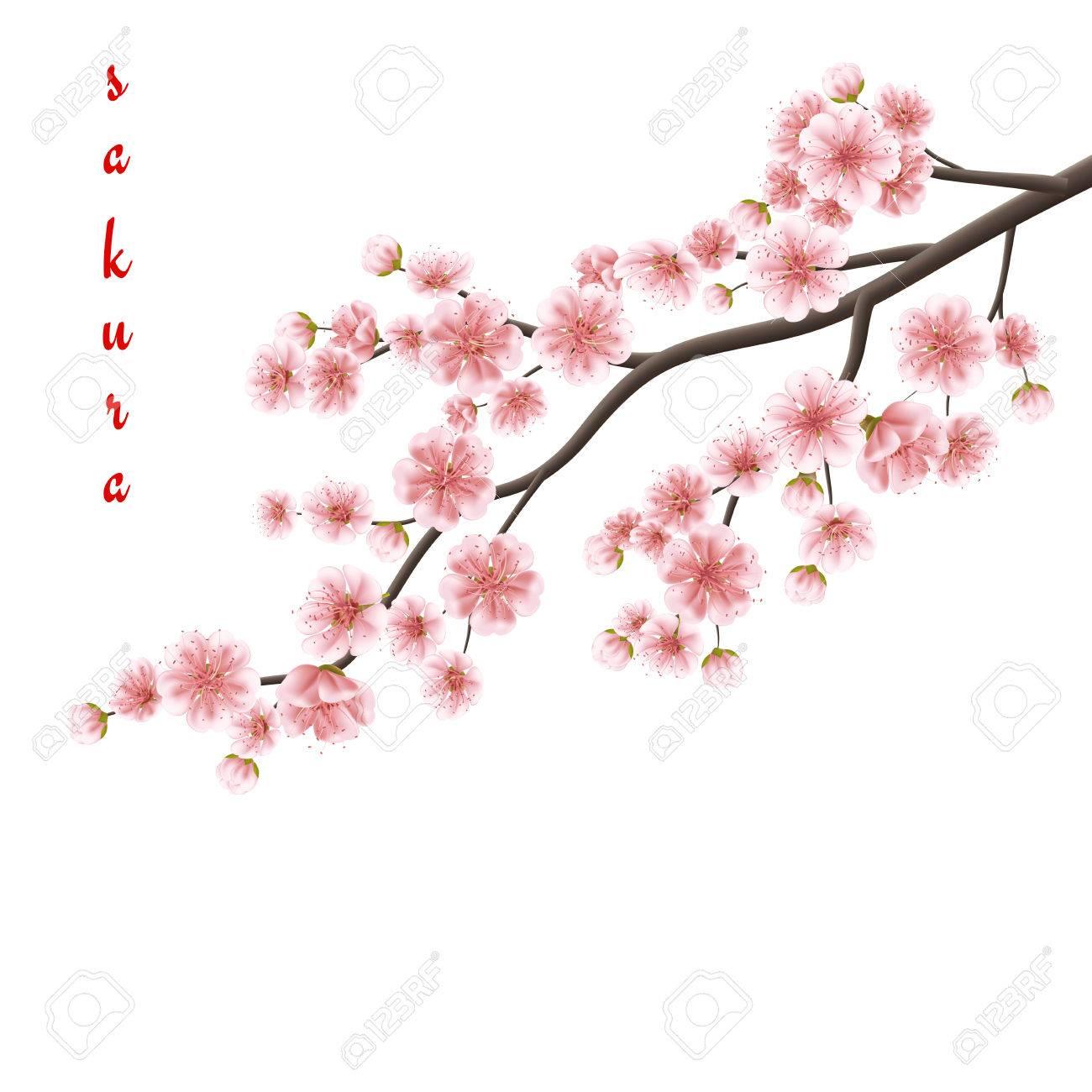 Realiste Sakura Japon Branche De Cerisier Avec Des Fleurs En Fleurs Fichier 10 Vecteur Eps Inclus Clip Art Libres De Droits Vecteurs Et Illustration Image 56474831
