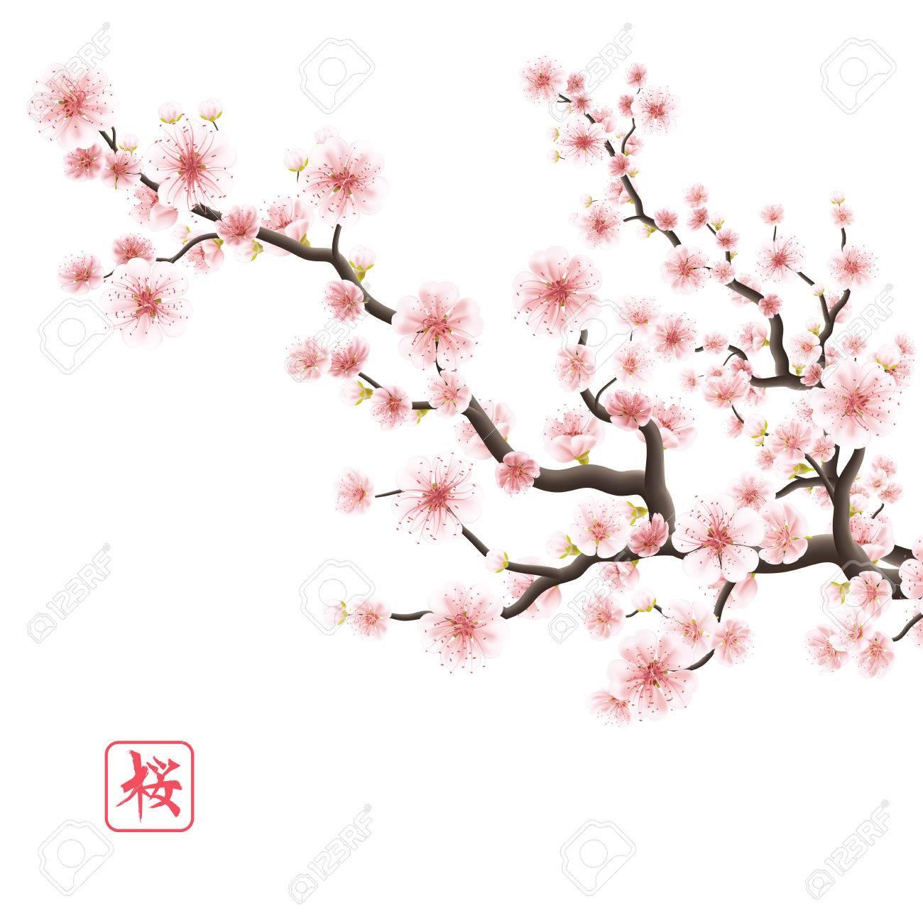 Realiste Sakura Japon Branche De Cerisier Avec Des Fleurs En Fleurs Clip Art Libres De Droits Vecteurs Et Illustration Image 56755266