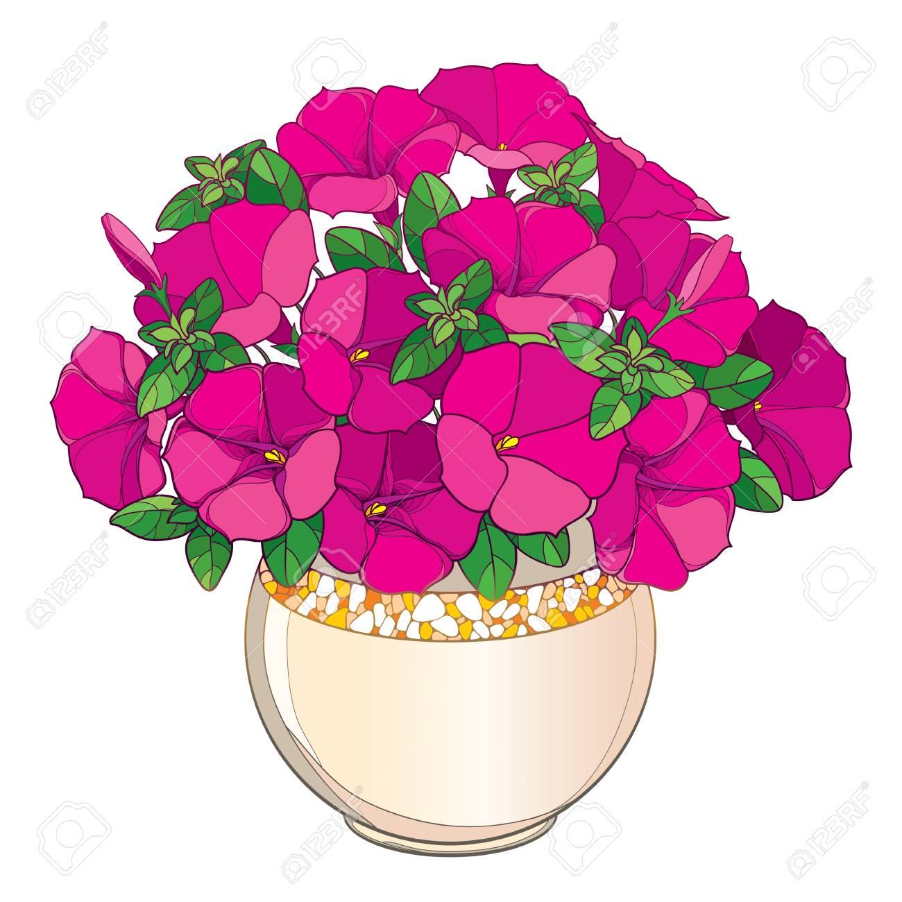 bouquet avec contour rose petunia fleur feuille verte et bourgeon en pot de fleurs rond orne isole sur fond blanc plante ornementale de jardin