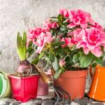 Home Gardening Greenhouse Concept Indoor Flower Garden Small Stock Photo Picture And Royalty Free Image Image 139937296