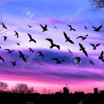Flying Birds And Cityscape On Beautiful Purple Sunset Background Stock Photo Picture And Royalty Free Image Image 60910697