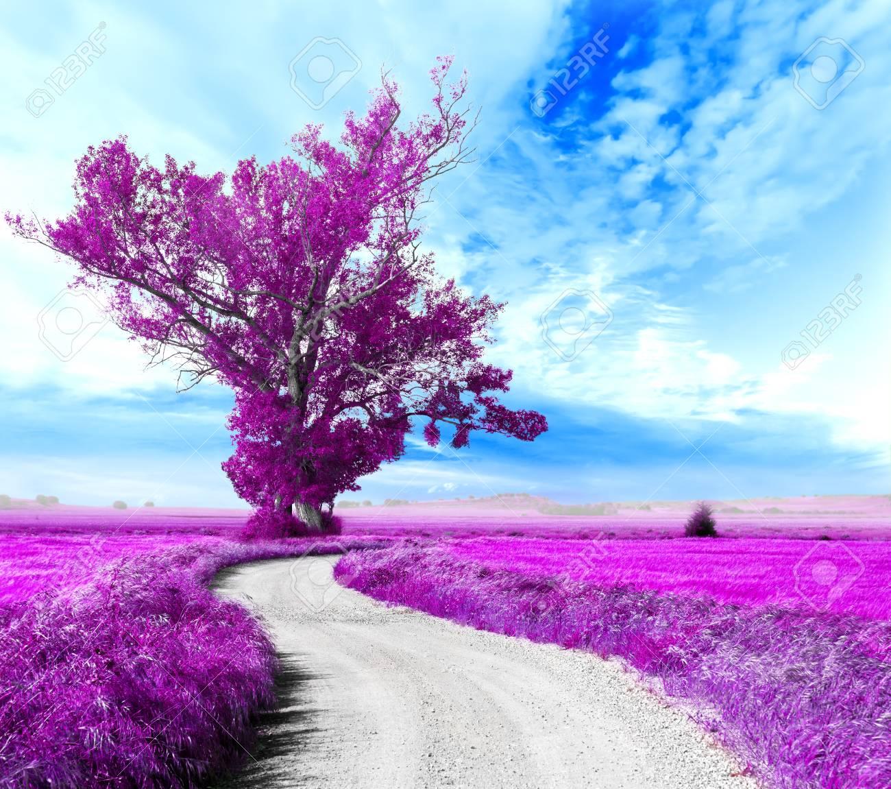 Traductions en contexte de paysage de rêve en français-anglais avec Reverso Context. Surreal Tree And Dreamscape Road Through The Fields Stock Photo Picture And Royalty Free Image Image 69970333
