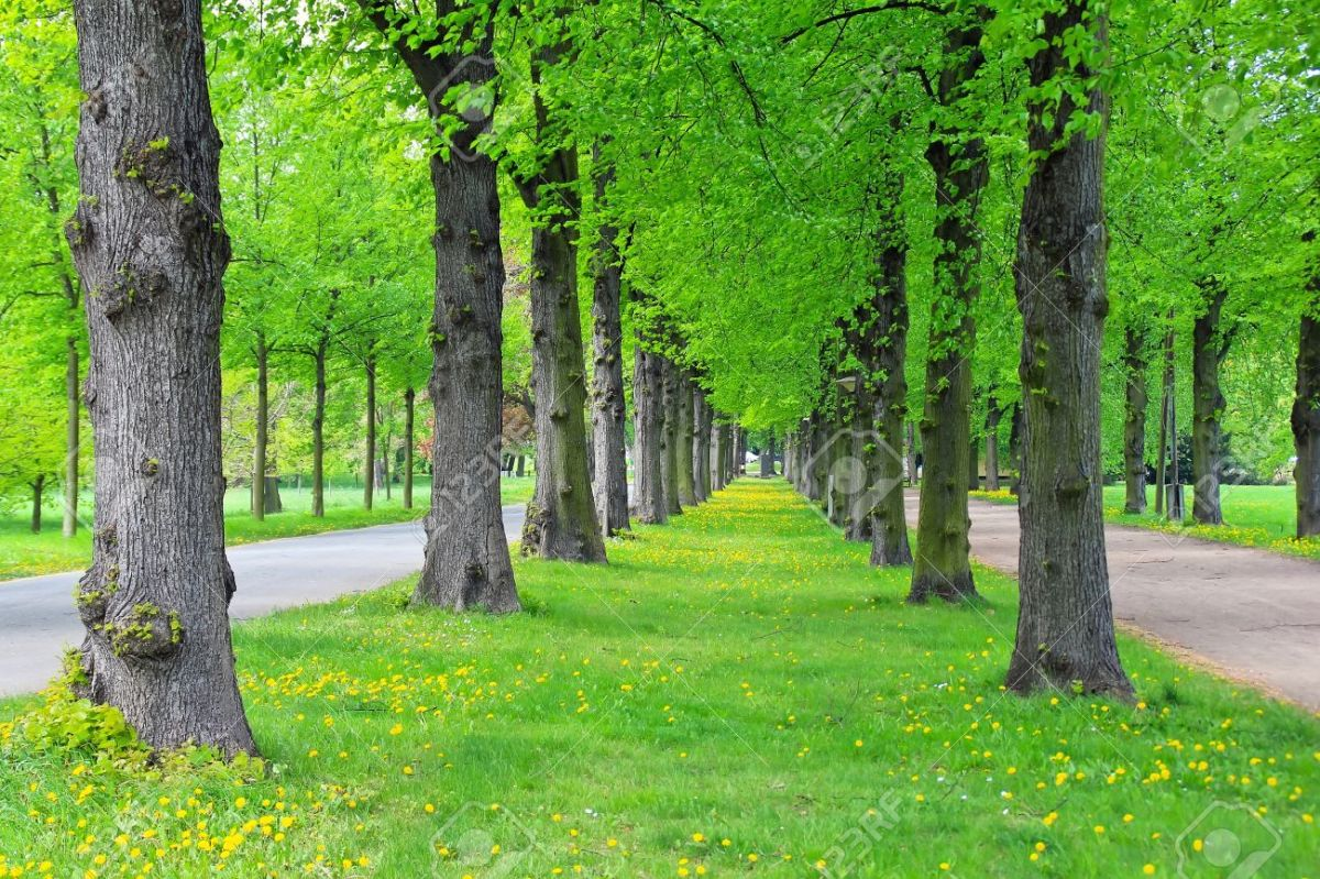 Image result for Trees in Park
