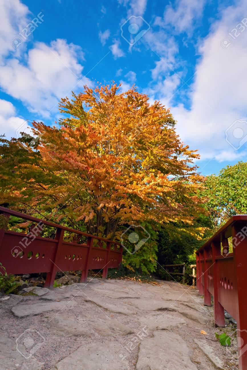 https fr 123rf com photo 37562582 arbre d automne et le pont en bois rouge avec pierre pos c3 a9e voie au jardin chinois royal botanic gar html