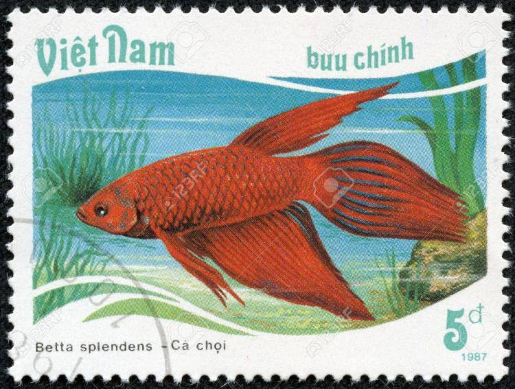 Image result for betta fish stamp