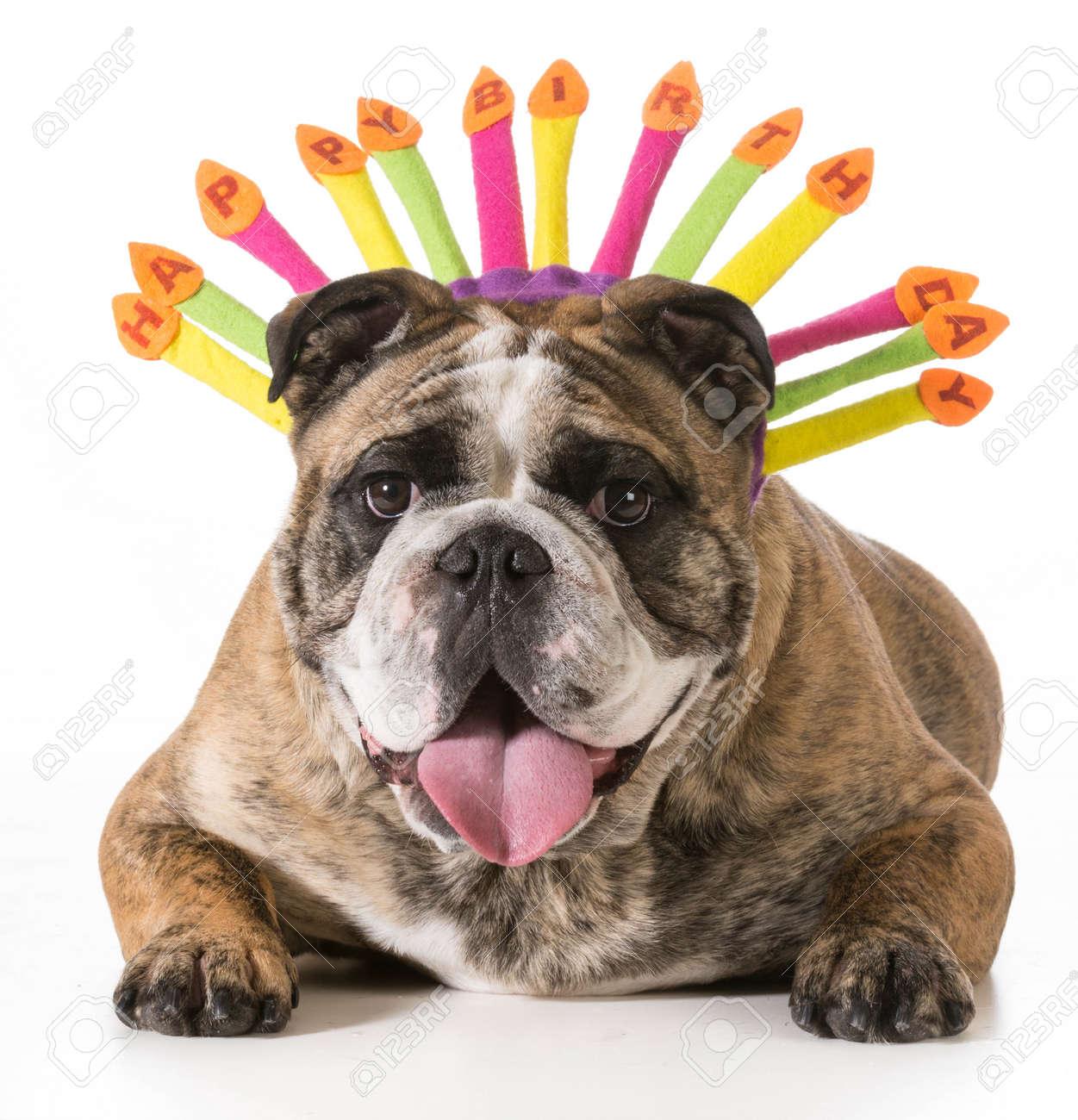 Holly Hund Happy Birthday Youtube