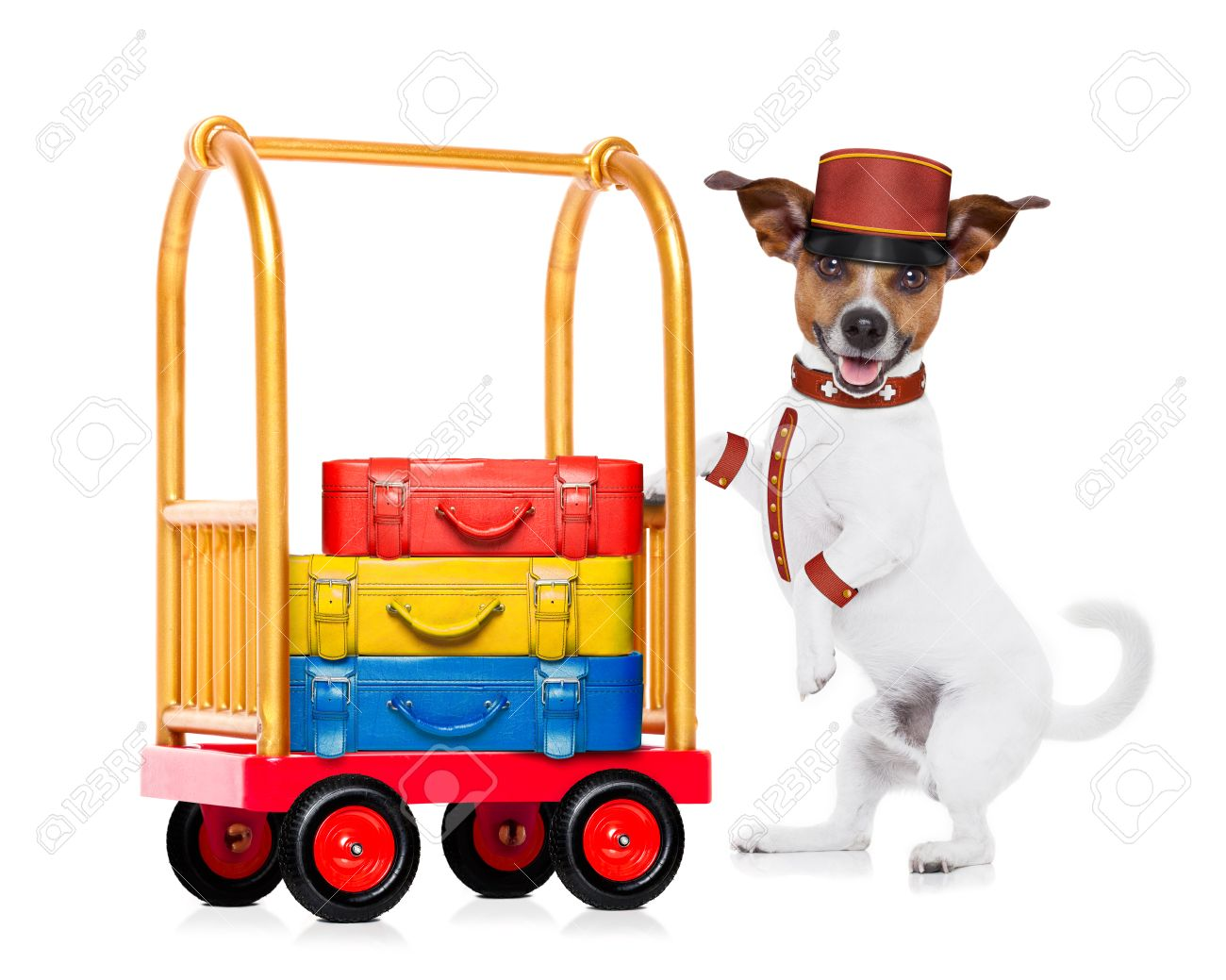 Image result for image of hotel cart for luggage