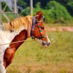 Rajasthani Beautiful Horse On Standing Arabian Horse Beautiful Stock Photo Picture And Royalty Free Image Image 142268286