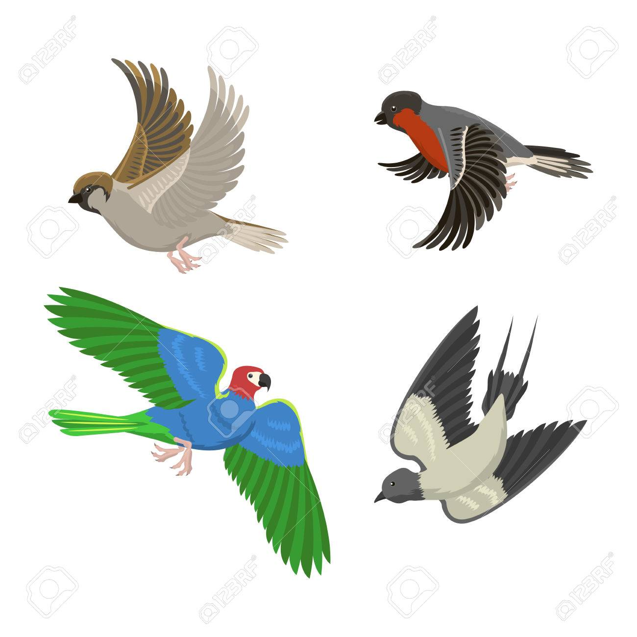 Set Of Different Flying Birds Vector Illustration Royalty Free Cliparts Vectors And Stock Illustration Image 71719175