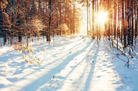 Paysage Avec La Forêt D'hiver Et Les Rayons Du Soleil Lumineux. Lever,  Coucher De Soleil Dans La Forêt Enneigée Froid Banque D'Images Et Photos  Libres De Droits. Image 31870454.