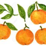 Mandarin Tangerine Orange Watercolor Gouache Illustration Citrus Stock Photo Picture And Royalty Free Image Image 119047096