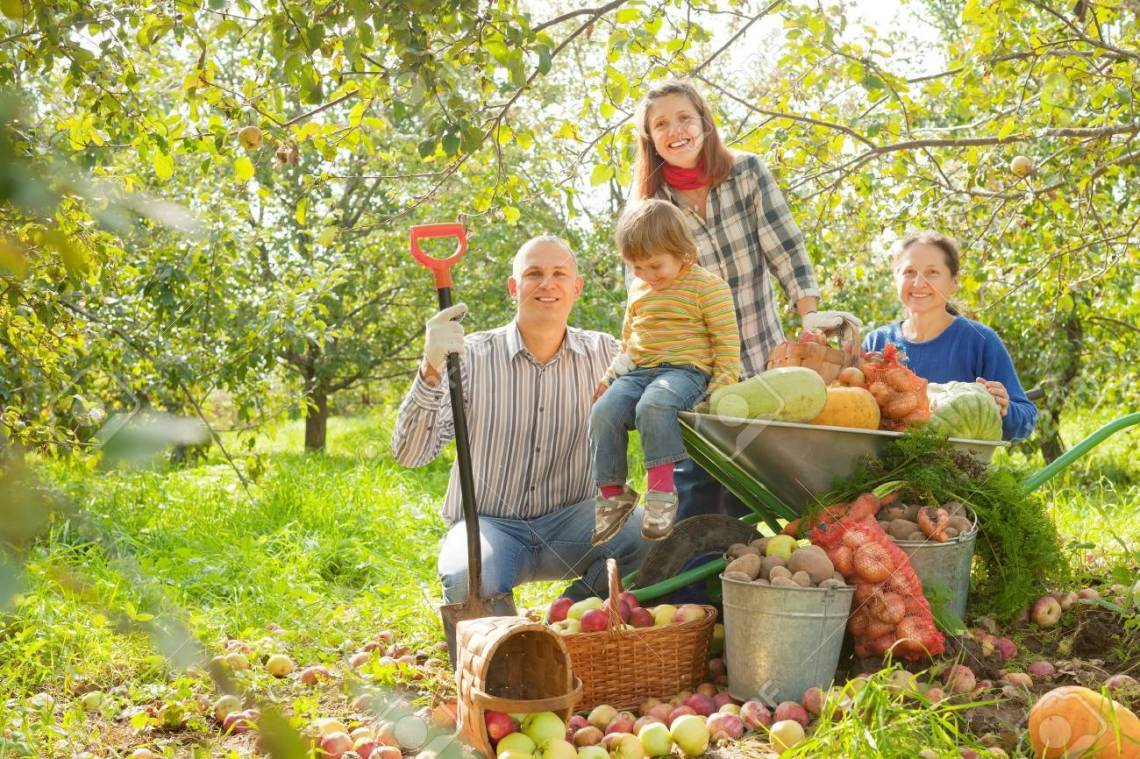 Happy Family With Harvest In Vegetable Garden Stock Photo Picture And Royalty Free Image Image 20105631
