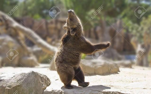 Great Happy Dancing Bear Stock Photo 11065404