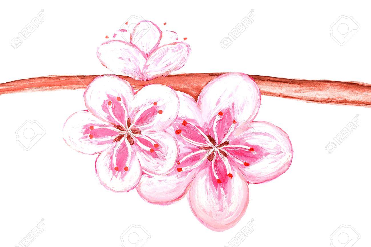 Fleur De Sakura Dessin De La Peinture Isole Sur Fond Blanc Banque D Images Et Photos Libres De Droits Image 15828437