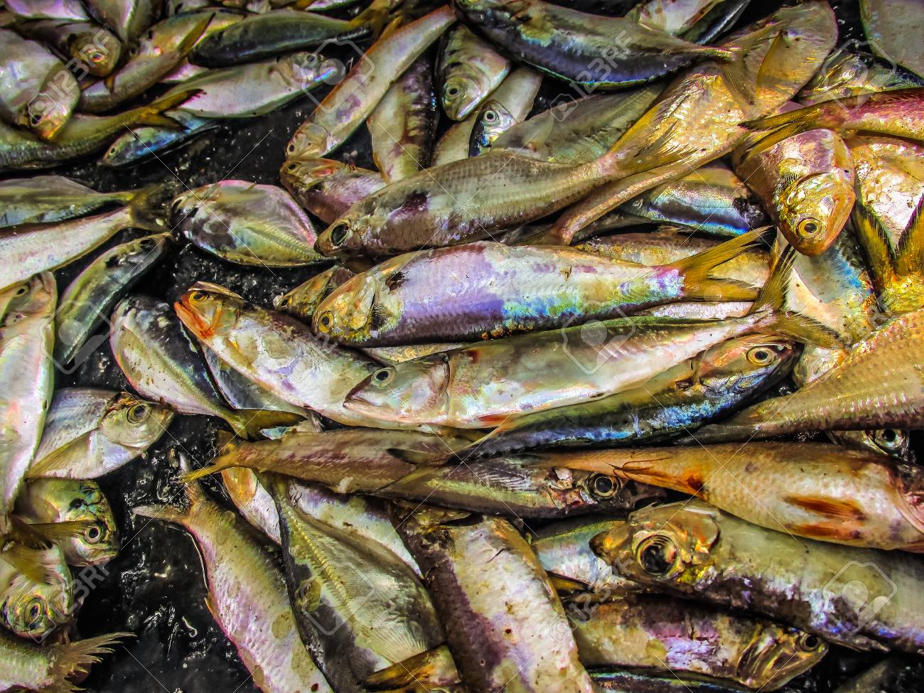 Closeup Of Different Types Of Fishes In The Fish Market In Southern Stock Photo Picture And Royalty Free Image Image 94255462