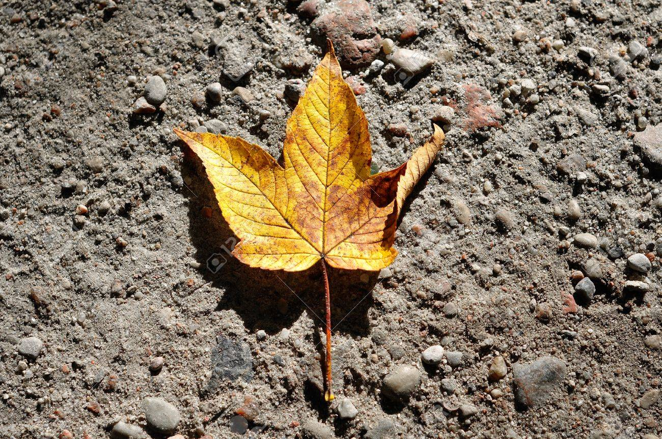 Image result for leaf lying on ground