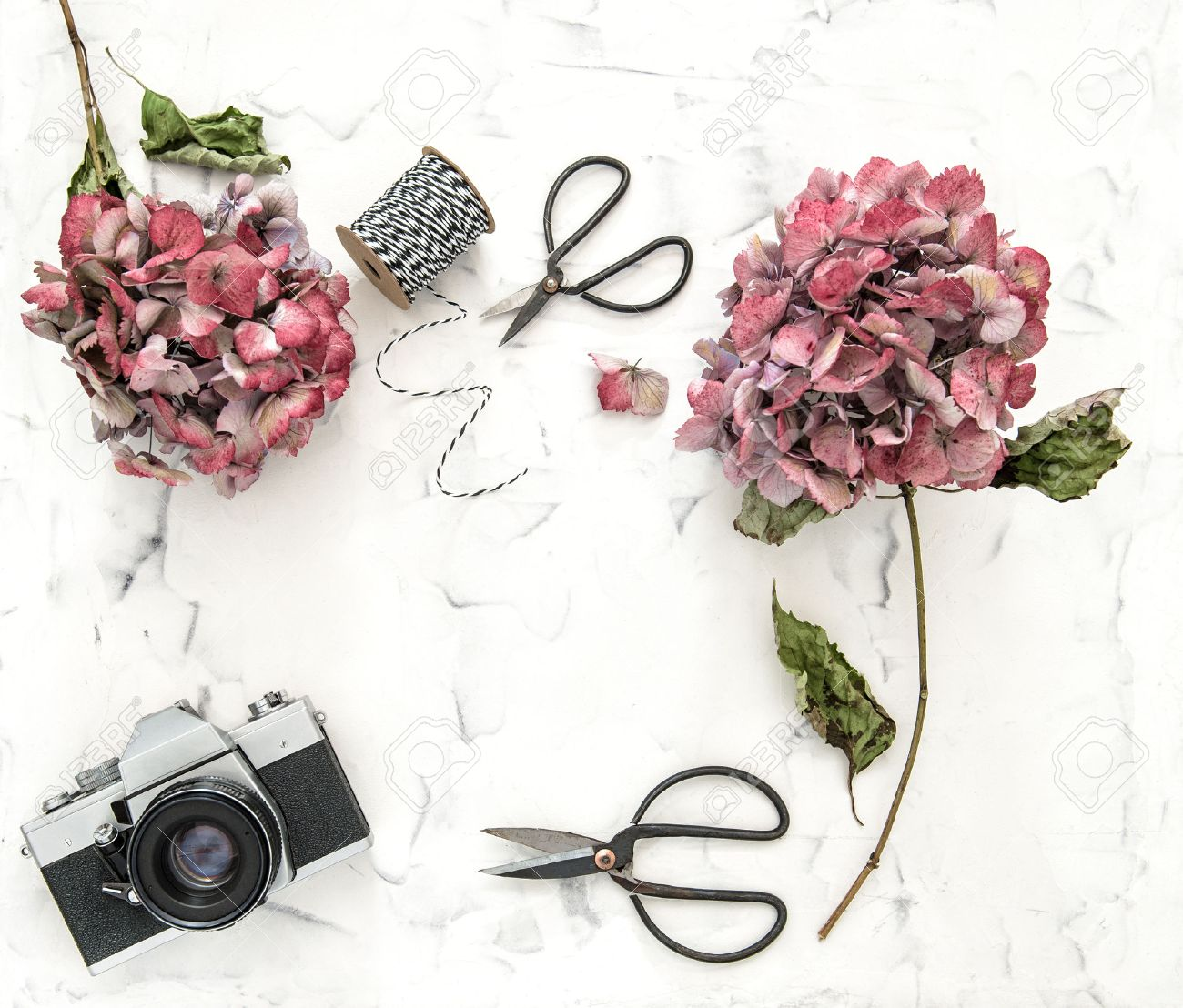 Flat Lay With Hortensia Flowers  Vintage Scissors And Retro Photo     Flat lay with hortensia flowers  vintage scissors and retro photo camera on  white marble background