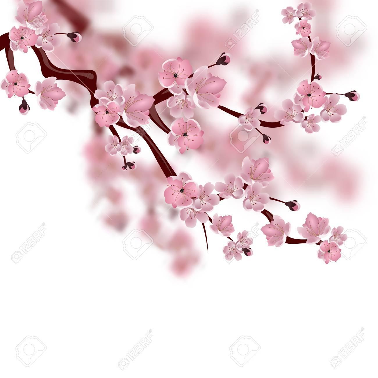 Cerisier Japonais Une Branche De Fleur De Sakura Rose Isole Sur Fond Blanc Avec Des Nuances Illustration Banque D Images Et Photos Libres De Droits Image 68946437