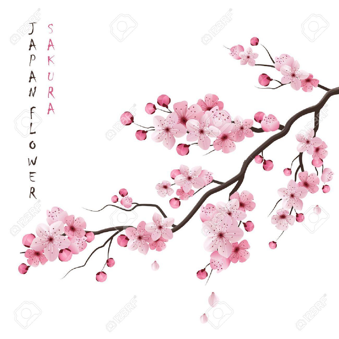 Realiste Sakura Japon Branche De Cerisier Avec Des Fleurs En Fleurs Illustration Vectorielle Clip Art Libres De Droits Vecteurs Et Illustration Image 50704476