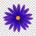 Simple Flower Of Violet Colors On A Transparent Background Royalty Free Cliparts Vectors And Stock Illustration Image 111520501
