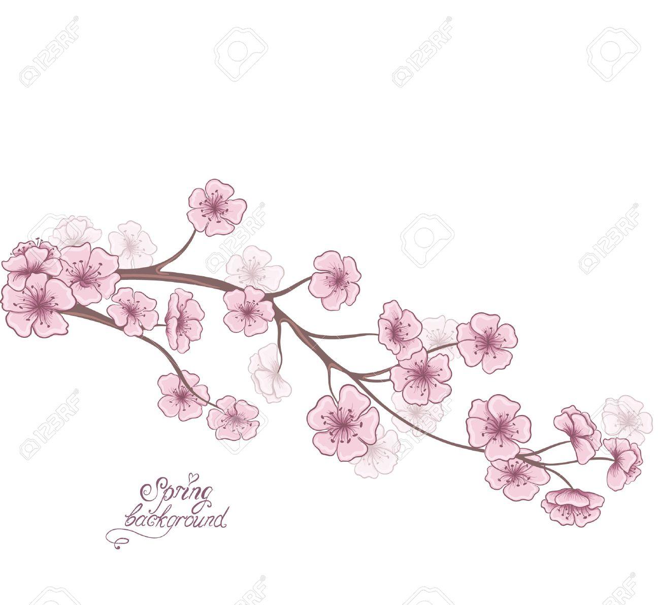 Branche De Cerisier En Fleurs Isole Sur Un Fond Blanc Decoratif Printemps Floraux Dessin A La Main Vector Illustration Clip Art Libres De Droits Vecteurs Et Illustration Image 26068149