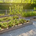 Community Kitchen Garden Raised Garden Beds With Plants In Vegetable Stock Photo Picture And Royalty Free Image Image 124979262