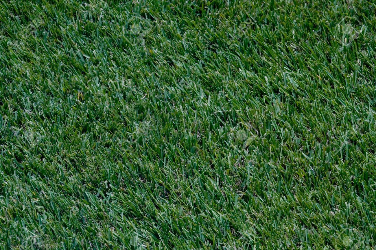 patch of grass के लिए चित्र परिणाम