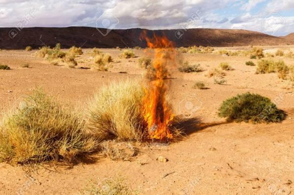 burning bush # 20