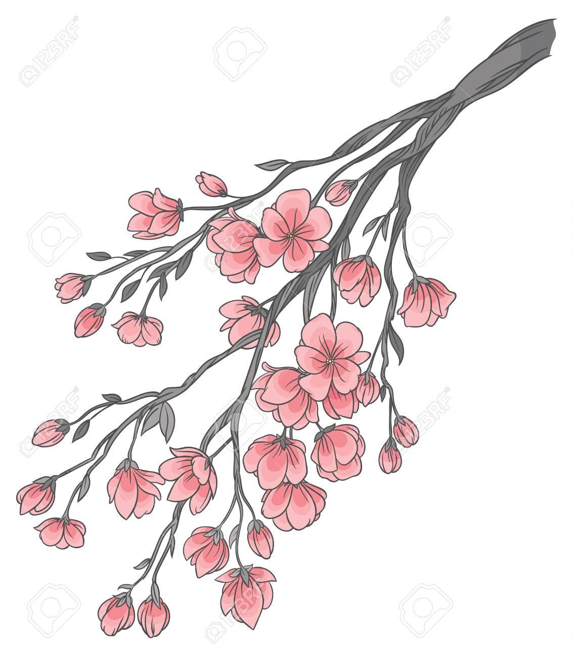 Dessin De Main De Vecteur Branche De Fleurs De Cerisier Sakura Avec Delicates Fleurs Roses Sur Fond Blanc Clip Art Libres De Droits Vecteurs Et Illustration Image 82455889