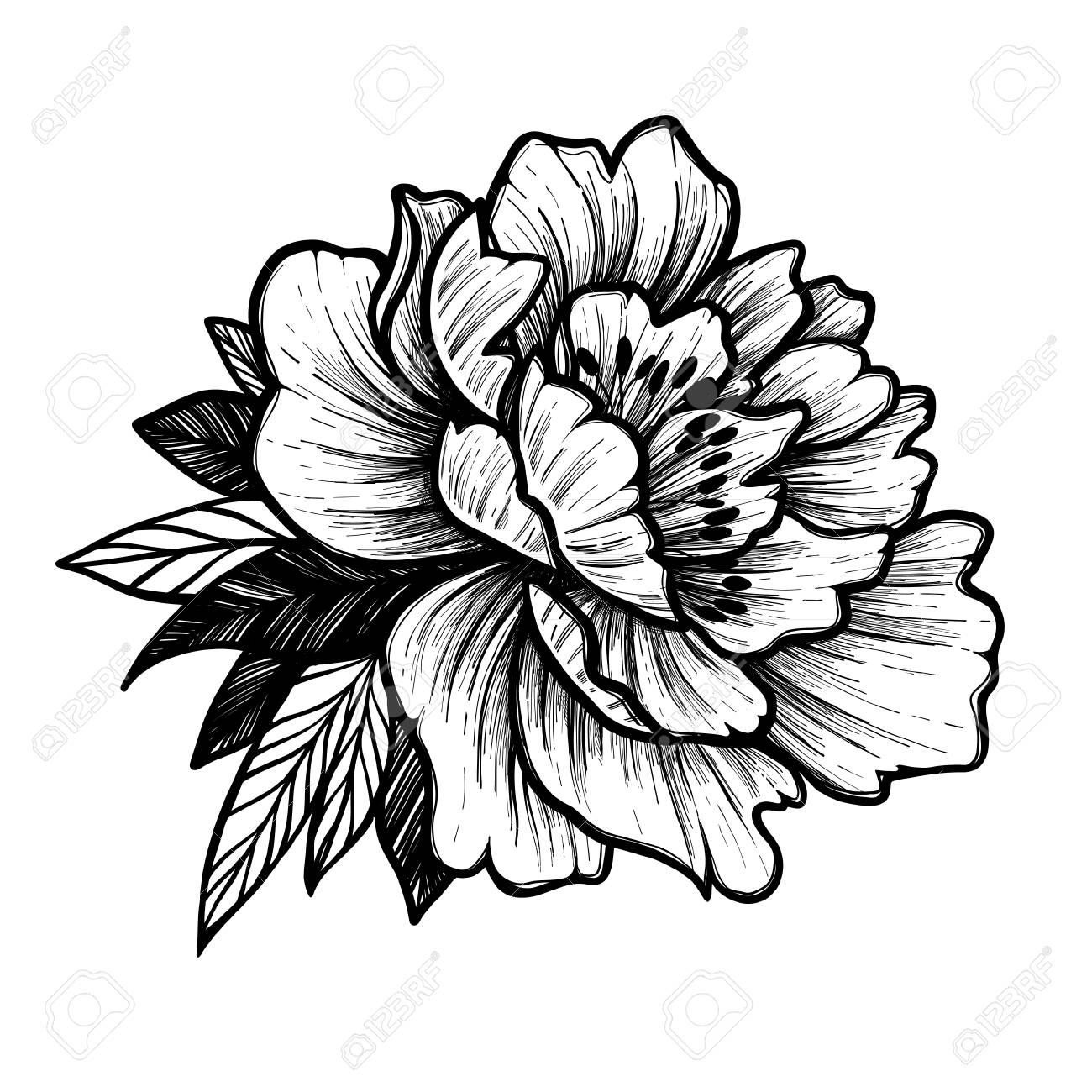 Ilustracion De Vector Dibujado A Mano Flor De Peonia Boceto De Tatuaje Floral Perfecto Para Tatuajes Invitaciones Tarjetas De Felicitacion Citas Blogs Carteles Etc Ilustraciones Vectoriales Clip Art Vectorizado Libre De