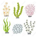 Sea Plants And Aquatic Marine Algae Seaweed Set Vector Illustration Royalty Free Cliparts Vectors And Stock Illustration Image 82151215