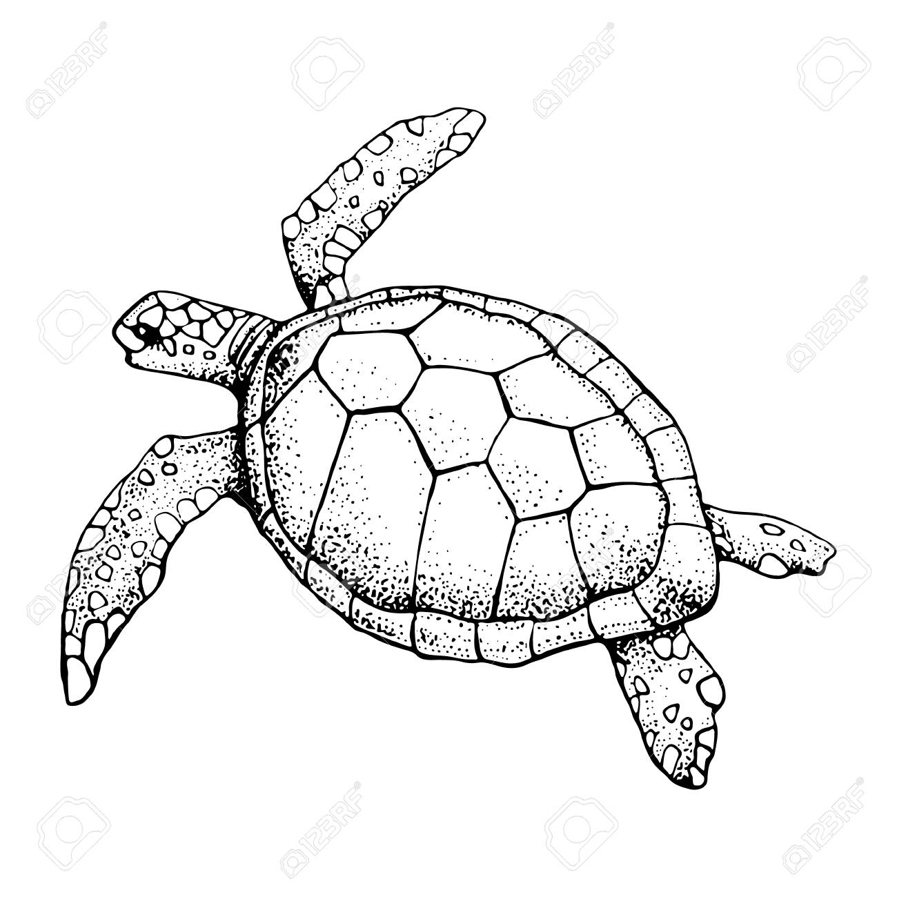 Hand Drawn Sea Turtle Isolated On A White Background Royalty Free Cliparts Vectors And Stock Illustration Image 122482767