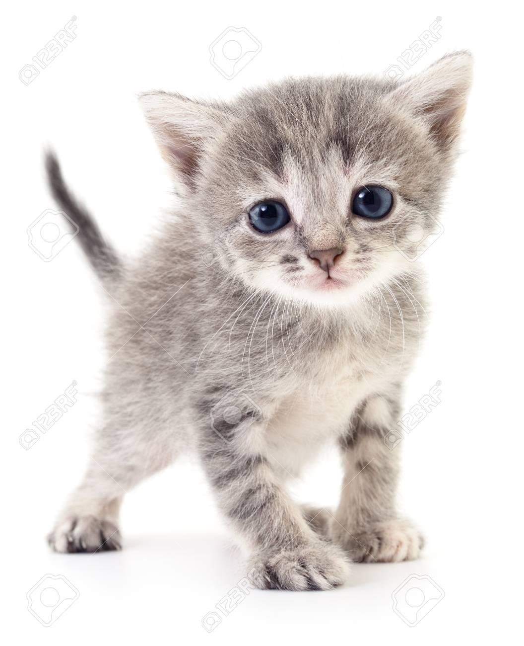 petit chaton gris isole sur fond blanc