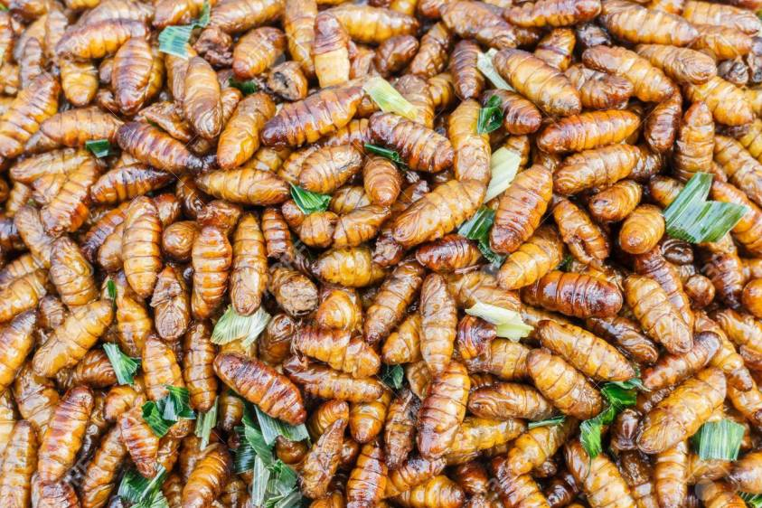 Silkworm snack - Eating bugs in Thailand | Ummi Goes Where?