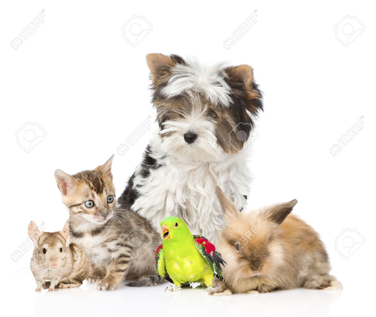 Domestic Animals Stock Photos And Images 123rf
