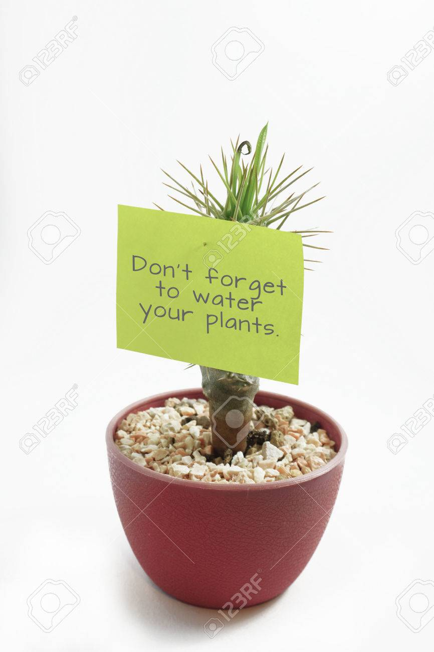 small plant with thorns have black copy on green stick note inspiration for watering