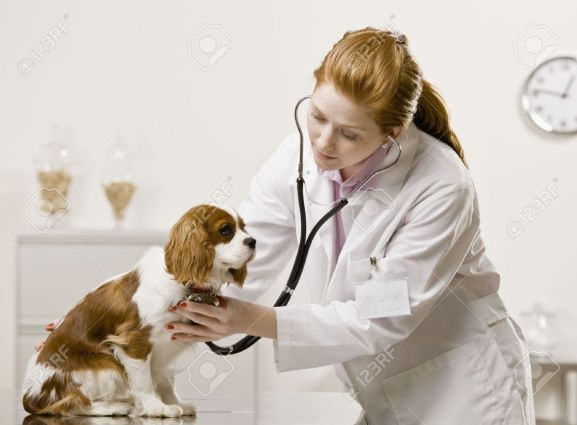 Image result for picture of redhead woman veterinarian