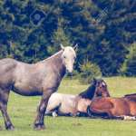 Wild Horses Running Free At The Mountains Stock Photo Picture And Royalty Free Image Image 148709240
