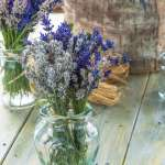 Fresh Lavender Bouquet In A Vase Stock Photo Picture And Royalty Free Image Image 43245328