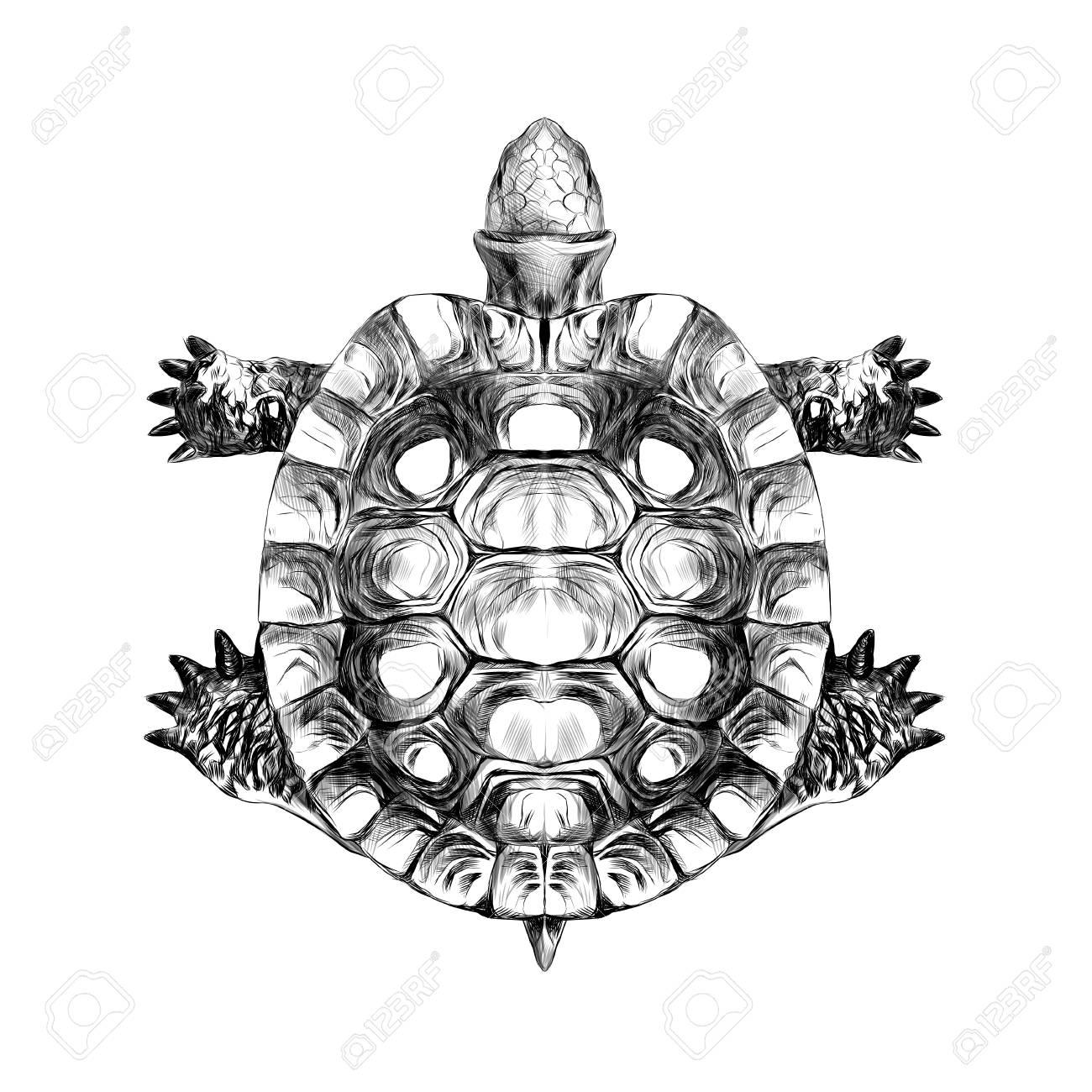 carre de tortue carapace rampant croquis dessin vectoriel noir et blanc